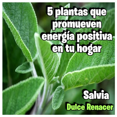 Dulce renacer 5 plantas que promueven energ a positiva - Energias positivas y negativas ...
