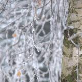 zima w przelewicach