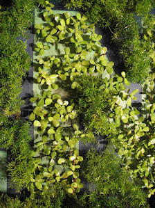 A vertical garden can be made to look very interesting using patterns or words