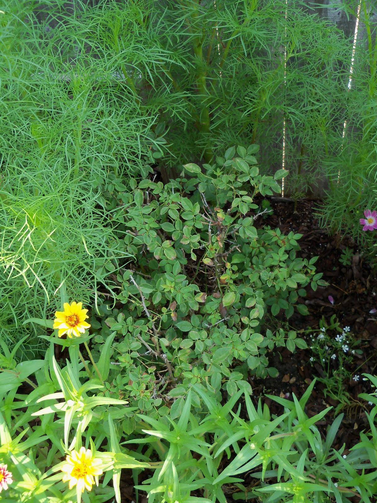 Gardening 2010, Part Two - 101_3289.JPG