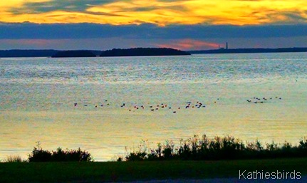 20. gulls in the bay 10-6-15