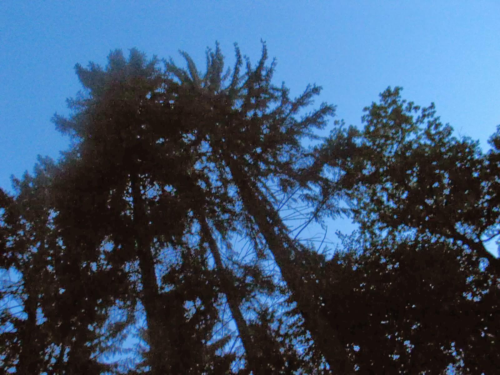 Taborjenje, Lahinja 2006 1.del - IMG_4614.JPG