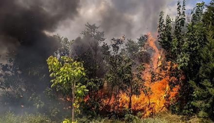Μεγάλη πυρκαγιά στη Μεγαλόπολη Αρκαδίας - Εκκενώνονται προληπτικά τα Καλύβια