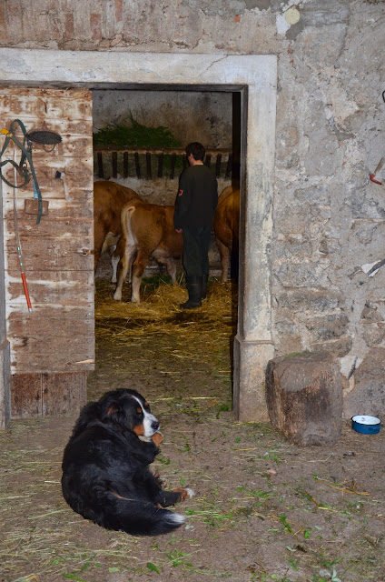 Domače živali-home animals - DSC_0355.jpg