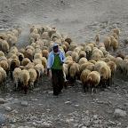 Israel - herder
