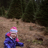 Christmas Tree Hunting 2014