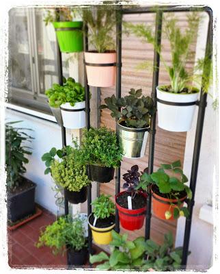 La piccola casa dopo quella delle fragole ecco le colonne for Fragole piante in vaso