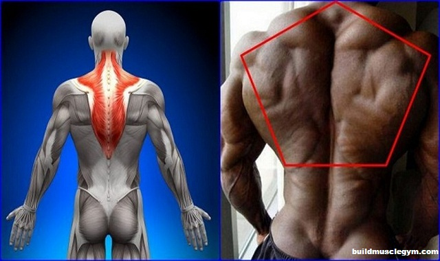 Back Workout For Huge Back & Traps