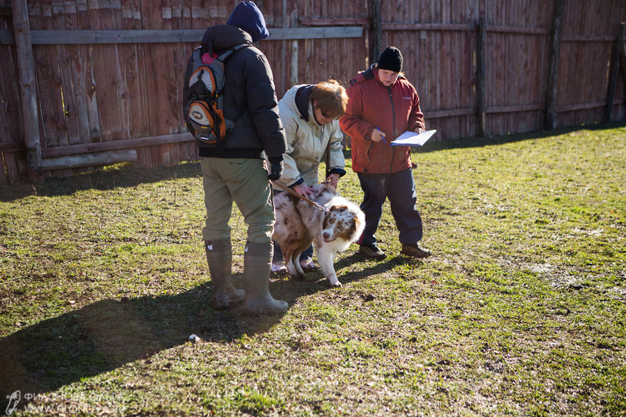 Тест на наличие пастушьего инстинкта - Страница 17 12-10-27-filonovaoawed-12-14-37-38