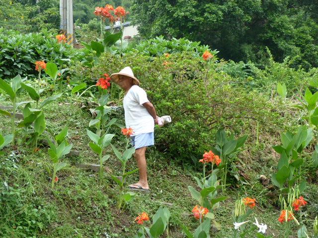 TAIWAN.Hsinchu et une minuscule partie du parc national de Sheipa, l empire du brouillard... - P1070777.JPG