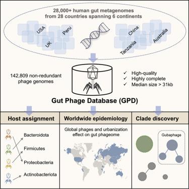 Gut phage database