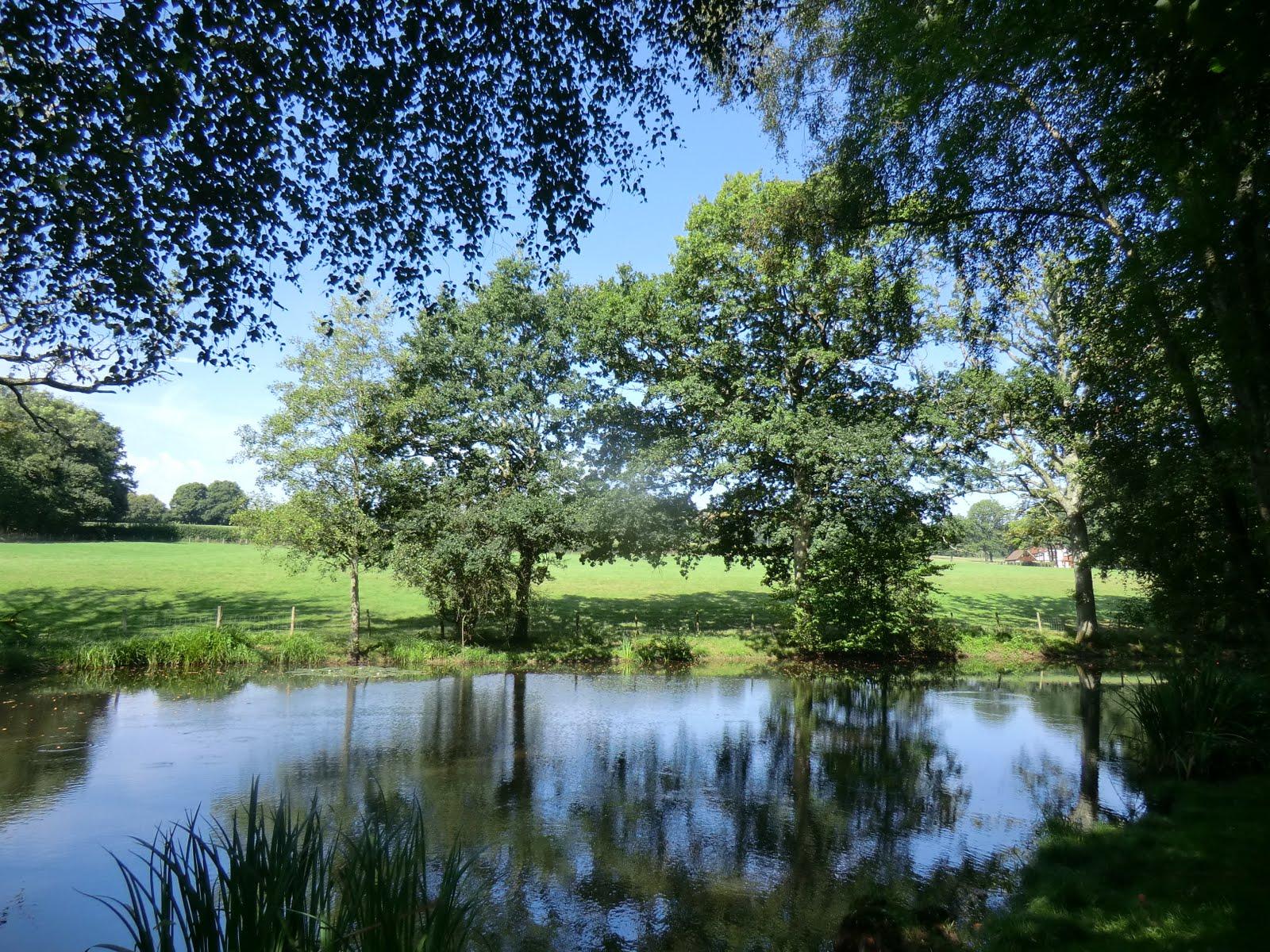 CIMG6487 Fishing Pond near Broadhurst Manor