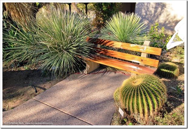 151230_Tucson_Tohono-Chul-Park_0066