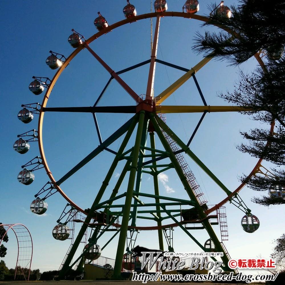 16-11-25-13-23-32-164_photo.jpg