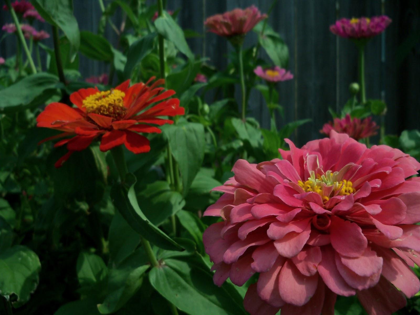Gardening 2011 - 100_8648.JPG