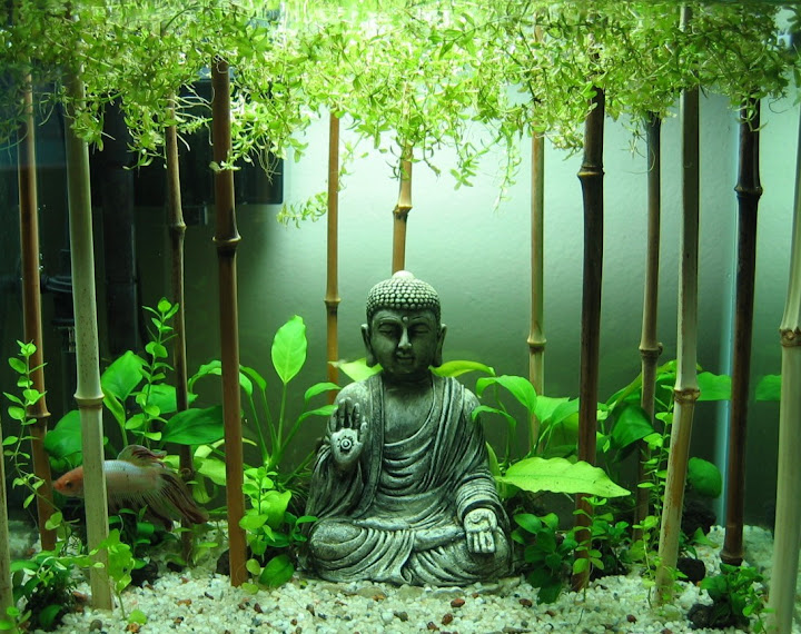 Decoration Zen Aquarium : The buddha s face thebuddhasface