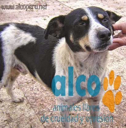 1era visita asistencia animales damnificados terremoto  Pisco 2007 (7)