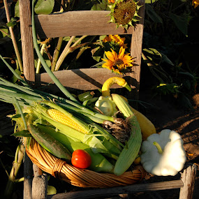 Dinner Tonite by Susan Hanson - Nature Up Close Gardens & Produce ( pwcv vegetable garden )