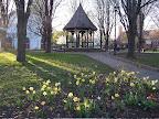 Gazebo and daffodils