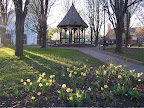 Gazebo and daffodils