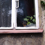 Window dog