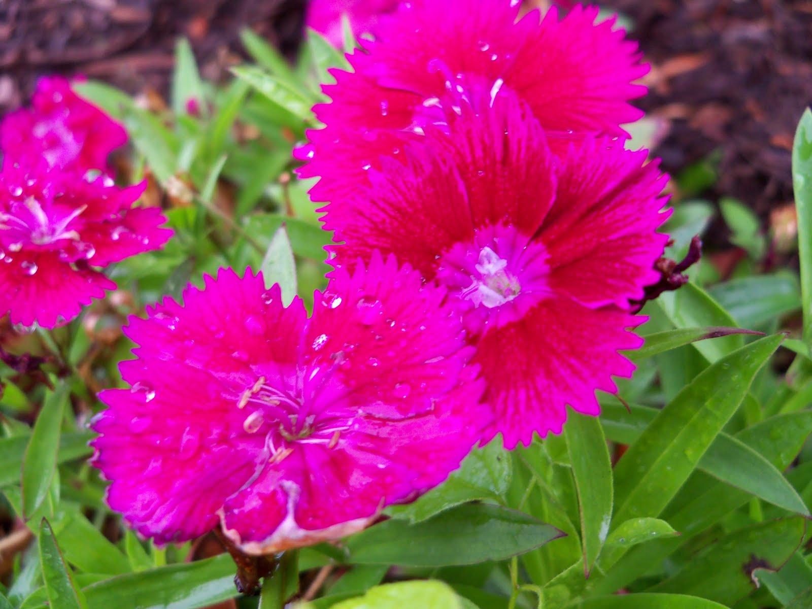 Gardening 2010 - 101_0548.JPG