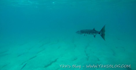 Barracuda - Marigot Bay - St. Martin