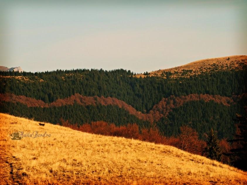 peisaj muntii baiului