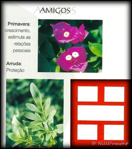 O-baguá-e-as-plantas-09