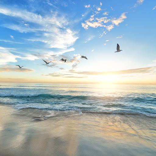 Cynthia Jackson Photo 26