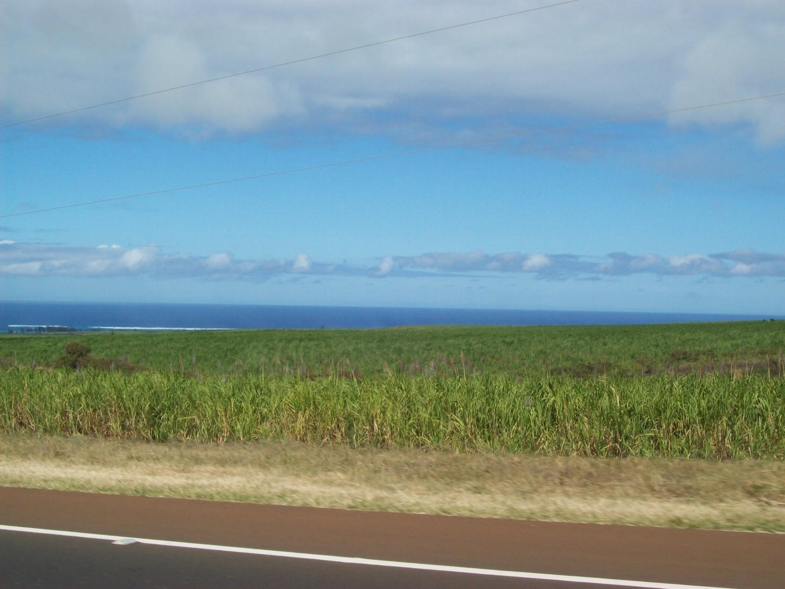 Hawaii Day 8 - 100_8155.JPG