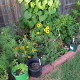 Gardening 2010, Part Three - 101_3646.JPG