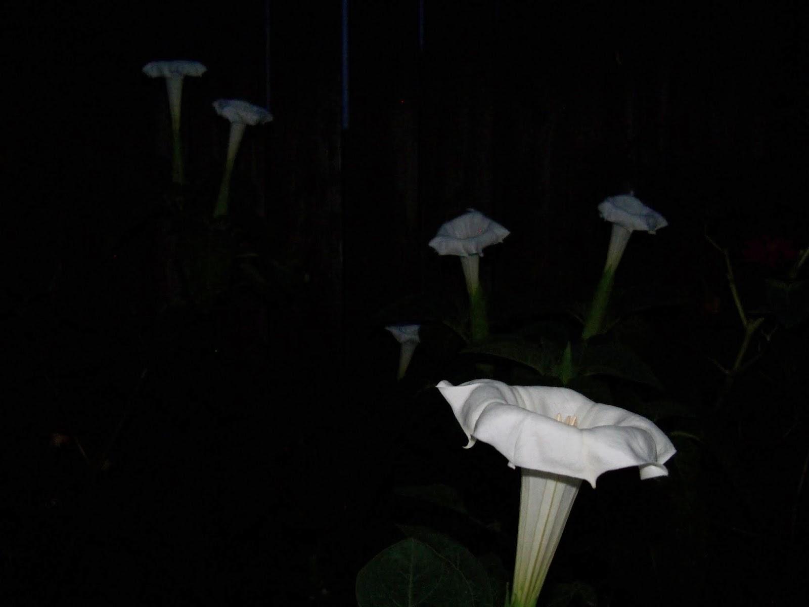Gardening 2014 - 116_3605.JPG