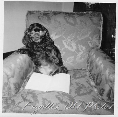 Dog reading GF ant