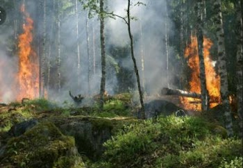 Hutan di Papua Sengaja di Bakar, Negara Abai