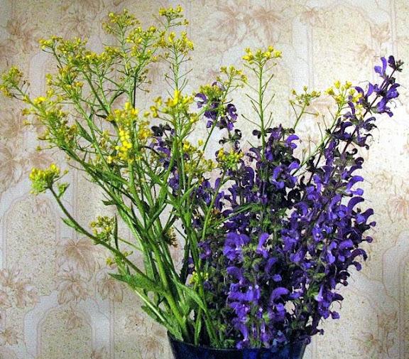 майские полевые цветы