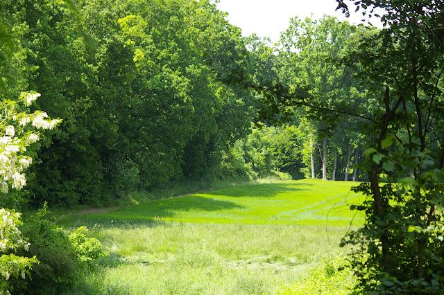 Forêt de Dreux, près des Hautes-Lisières ; biotope d'Apatura ilia et d'autres espèces. Photo prise le 31 mai 2009, J.-M. Gayman