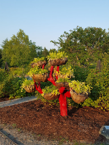 Tree-handed. More than A Garden: Curious Llamas, Tiny Houses, and Teapot Trees at Kingsbrae Garden