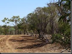 180508 084 Dingo Fence Near Hughenden
