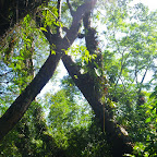 Zona de manglar