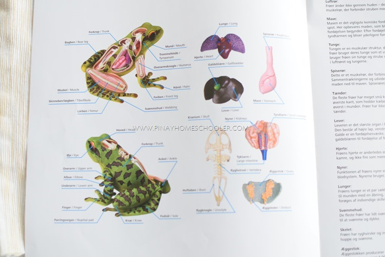 Anatomy of a Frog 3D Model | The Pinay Homeschooler