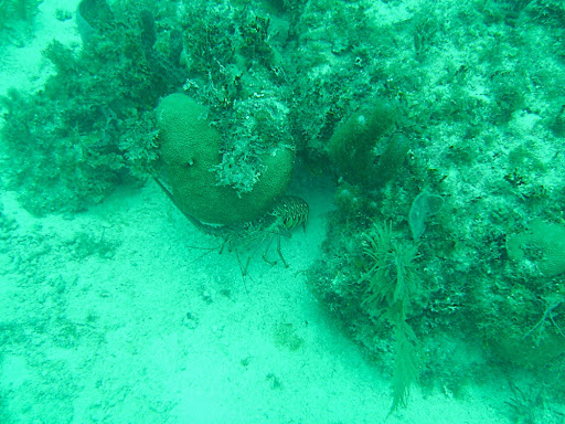 Lobsters were everywhere on this reef. Wish they were in season!