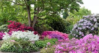 Borde Hill Garden - Old Rhododendron Garden
