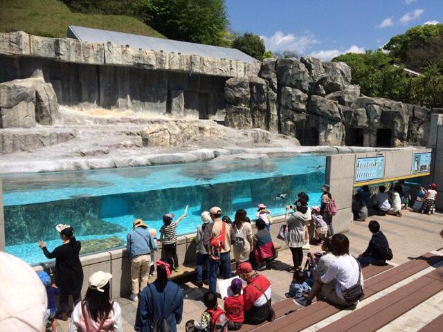とべ動物園のペンギン広場