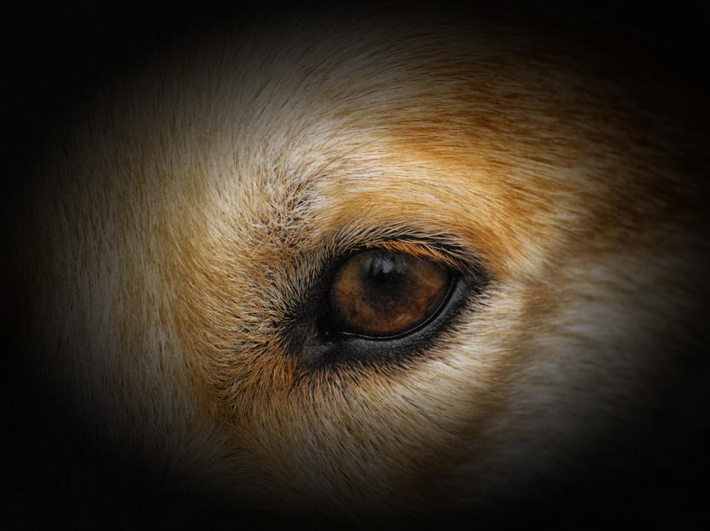 """Eye on Hannah"" by Celene Wendt"