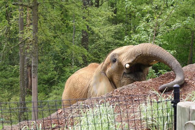 Zoo Snooze 2015 - IMG_7276.JPG