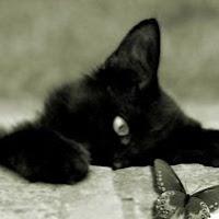 Creole kitten