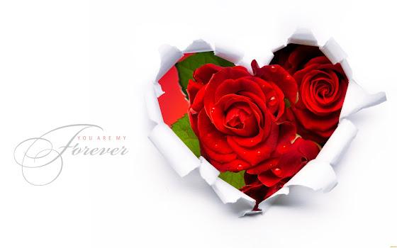 Valentinovo besplatne ljubavne slike čestitke pozadine za desktop 1440x900 free download Valentines day 14 veljača biljke cvijeće ruža