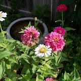 Gardening 2011 - 100_9975.JPG