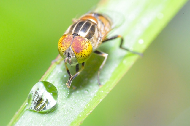 Macro photo - Fly